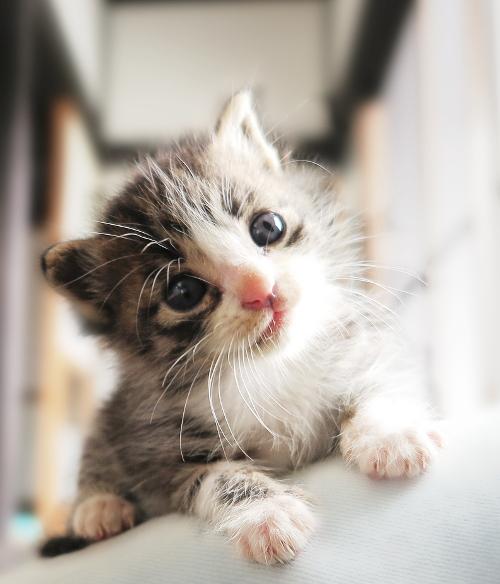 日本ペット診療所イメージ